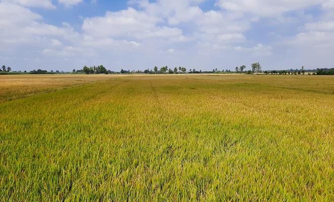 Long An được phép chuyển 142,61 ha đất trồng lúa để làm cụm công nghiệp