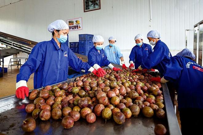 Những lô hàng trái cây mang thương hiệu Việt đã chinh phục được nhiều thị trường. Ảnh: Đức Thanh