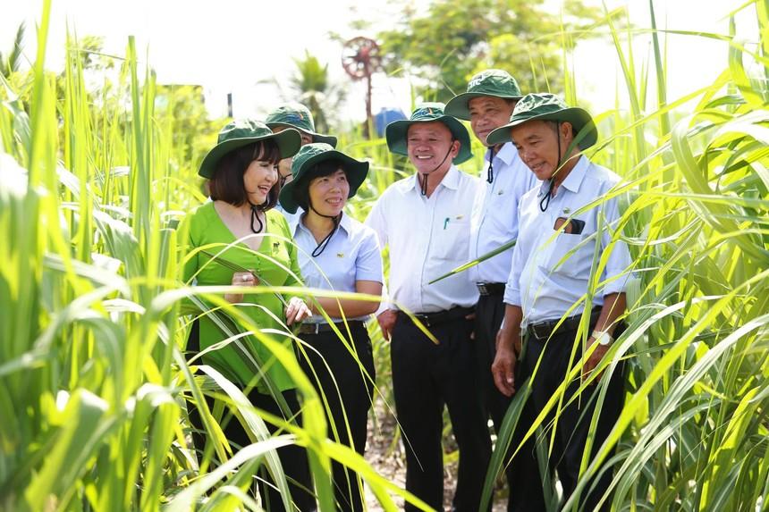 Viện Nghiên cứu Ứng dụng Kỹ thuật Nông nghiệp TTC Attapeu được thành lập sẽ là động lực mới giúp cải thiện đời sống người dân và kinh tế xã hội tại Attapeu.