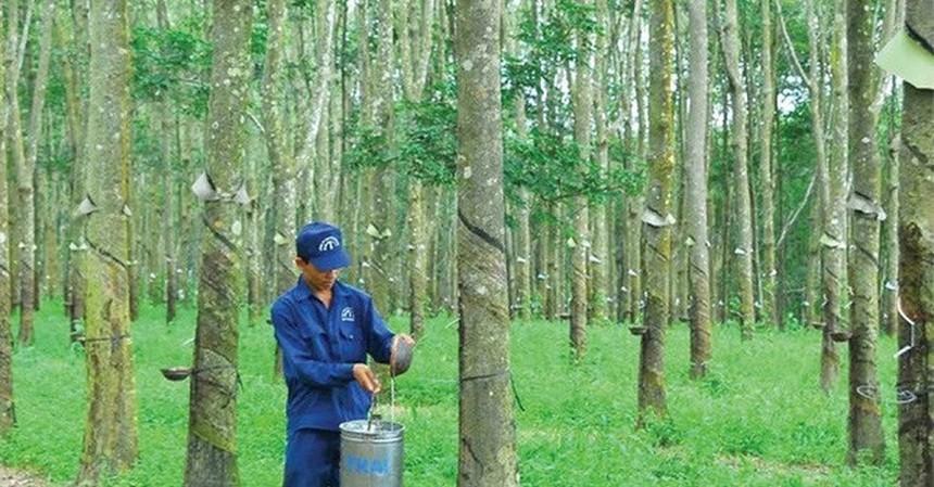 Cao su Đồng Phú (DPR) đăng ký bán toàn bộ hơn 2,8 triệu cổ phiếu quỹ