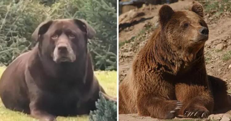 Chó lai Bella và gấu nâu Bắc Mỹ (phải). Ảnh: Tyla.