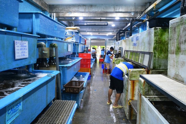 """Giới kinh doanh thủy hải sản """"rầu rĩ"""" vì dịch Corona hoành hành khiến doanh thu tụt giảm mạnh."""