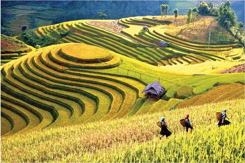 Yên Bái nổi tiếng với ruộng bậc thang Mù Cang Chải.