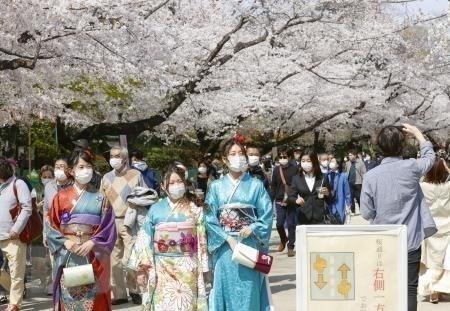 Hoa anh đào nở rộ tại Tokyo, Nhật Bản, ngày 27/3/2021. (Ảnh: Kyodo/TTXVN).