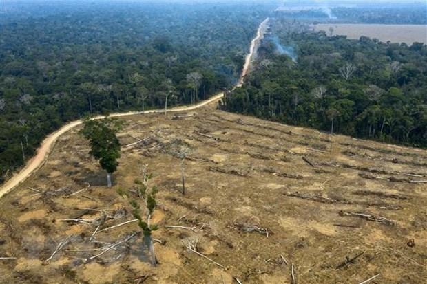 Một khoảng rừng Amazon bị thiêu rụi ở gần Porto Velho, bang Rondonia, Brazil, ngày 24/8/2019. (Ảnh: AFP/TTXVN).