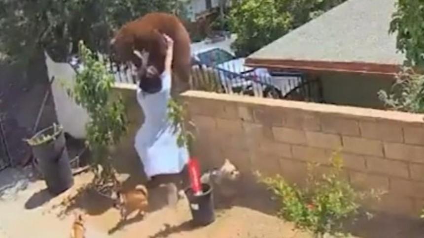 Hailey dùng hết sức để đẩy ngã con gấu.