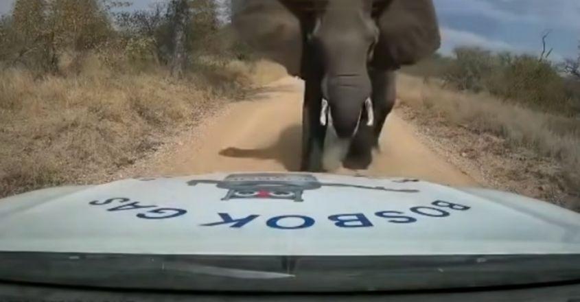 """Chạm mặt """"giang hồ"""", anh chàng shipper bị voi điên húc nát đầu xe"""