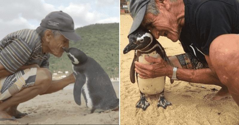 Chim cánh cụt vượt nắng, ngược gió hơn 8.000 km để quay trở về thăm ân nhân cứu mạng mỗi năm