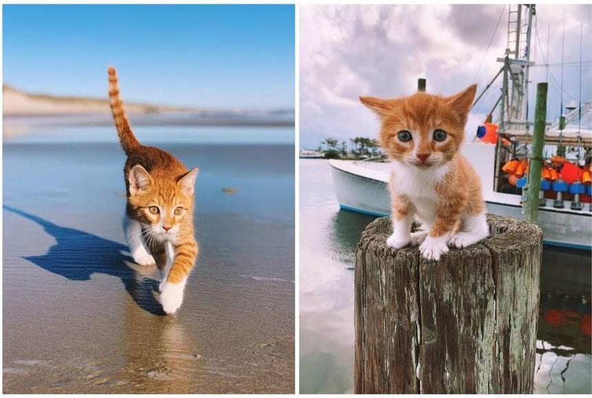 Marlin - con vật có hình hài của loài mèo nhưng lại mang tâm hồn của một chú chó, có khả năng bơi lội cực đỉnh