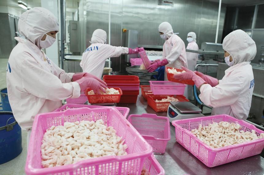 Trong tháng 8, sản lượng tôm sản xuất của FMC đạt 1,6 tấn, giảm 32% với cùng kỳ năm ngoái.