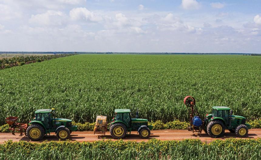 Nhiều doanh nghiệp đang mở rộng diện tích trồng mía