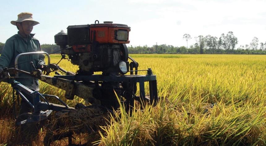 Dịch Covid-19 làm gián đoạn chuỗi cung ứng lúa hàng hóa trong quý III/2021
