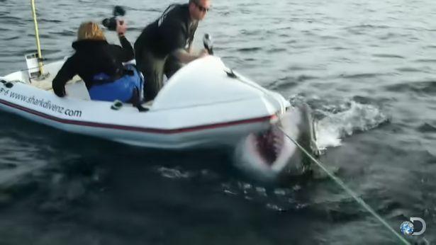 Đoàn làm phim số đen liên tục bị cá mập trắng khổng lồ tấn công