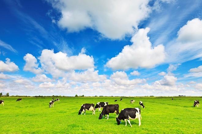 F&N Dairy Investments Pte.LTD tiếp tục đăng ký mua vào hơn 17,4 triệu cổ phiếu Vinamilk