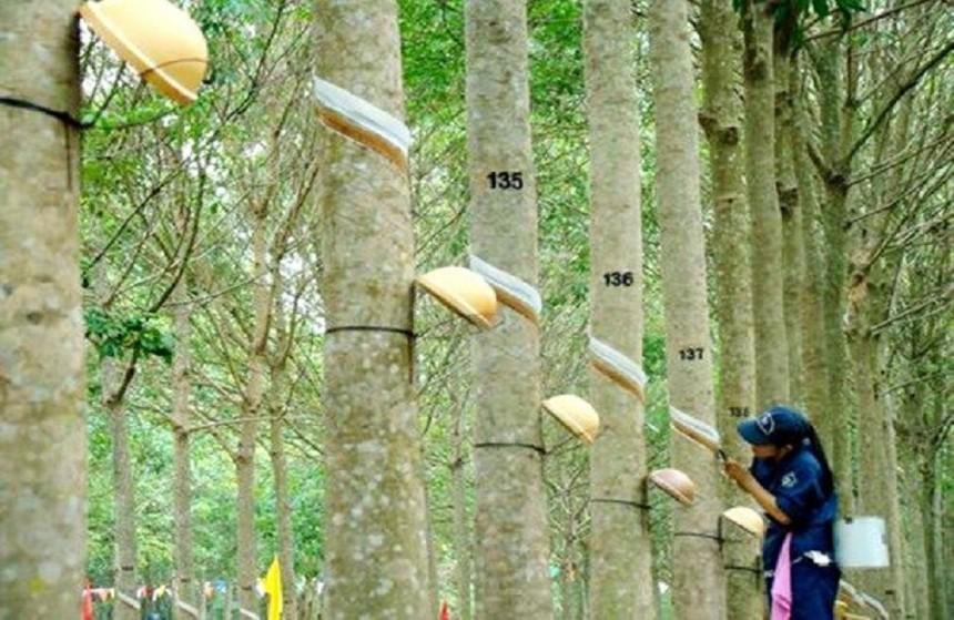 Quý III/2020, Cao su Phước Hòa (PHR) báo lãi 140 tỷ đồng, giảm 55,8%
