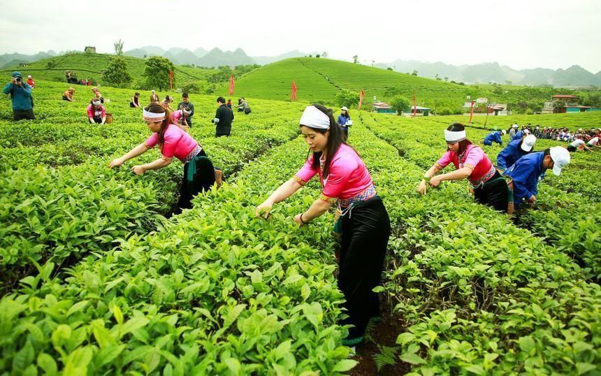 GTNFoods (GTN) trình cổ đông kế hoạch sáp nhập vào Tổng công ty Chăn nuôi Việt Nam (VLC)