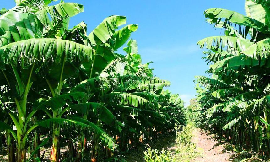 Lãnh đạo Nông nghiệp Quốc tế Hoàng Anh Gia Lai (HNG) đăng ký bán ra cổ phiếu