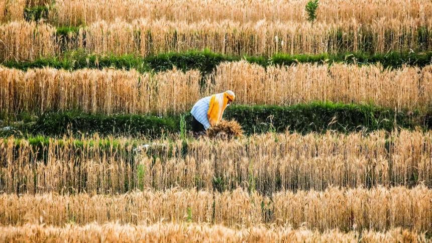 Giá thực phẩm cao nhất trong hàng thập kỷ đang ảnh hưởng đến người tiêu dùng và doanh nghiệp châu Á