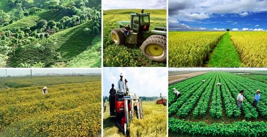 Tìm hiểu về chính sách tín dụng phục vụ phát triển nông nghiệp, nông thôn