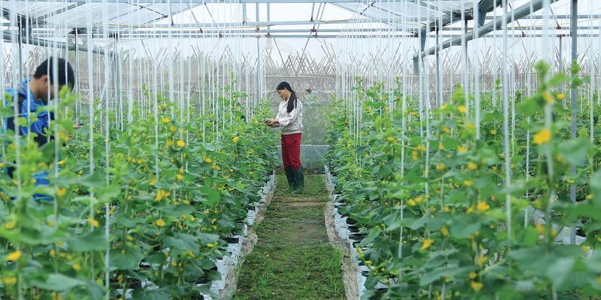 Nguồn vốn tín dụng góp phần đắc lực hỗ trợ chuyển đổi cơ cấu sản phẩm nông nghiệp