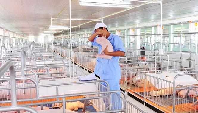 Nguyên nhân đẩy CPI tăng cao là do giá thịt lợn tăng mạnh