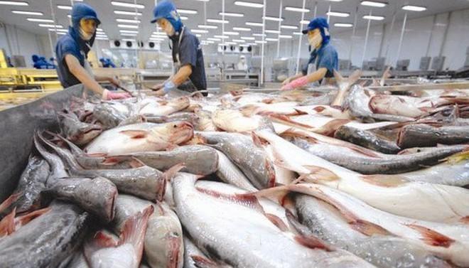 Cá tra Nam Việt kỳ vọng tăng lợi nhuận 20%/năm dù có ảnh hưởng từ nCoV