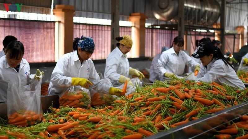 Có gần 9.000 người lao động bị ảnh hưởng vì dịch bệnh do virus Covid-19 gây ra.