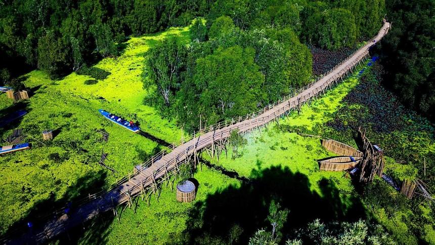 Cầu tre Trà Sư sử dụng trên 500.000 cây tre làm vật liệu để xây dựng