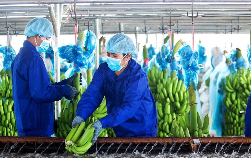 HAGL Agrico là công ty hoạt động trong lĩnh vực nông nghiệp