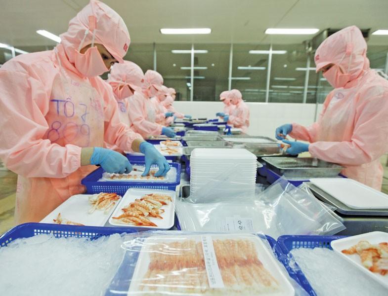 EVFTA đang tạo nhiều cơ hội cho nông, thủy sản xuất khẩu của Việt Nam. Trong ảnh: Chế biến tôm xuất khẩu tại Công ty Thủy sản Hồng Ngọc (Phú Yên). Ảnh: Đ.T