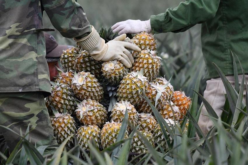 Xuất khẩu rau quả đang dần hồi phục, mang về gần 950 triệu USD, tăng 6,1% trong 3 tháng đầu năm 2021.