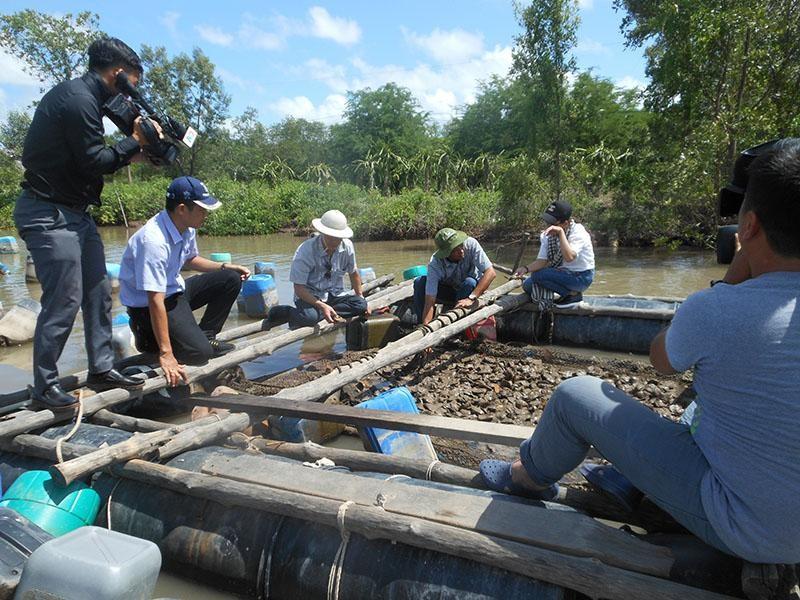 Dự án nuôi hàu trên sông tại Đất Mũi Cà Mau cho hiệu quả kinh tế cao.