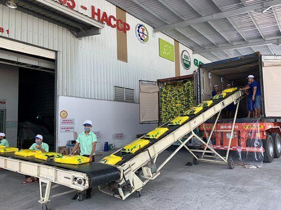 Mặt hàng gạo của Việt Nam đang có lợi thế cạnh tranh tại thị trường Ba Lan nhờ chất lượng và ưu đãi từ EVFTA.