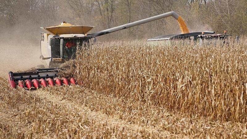 Theo số liệu của Bộ Nông nghiệp Mỹ, Trung Quốc nhập khẩu kỷ lục hơn 11,74 triệu tấn ngô từ Mỹ, trong 5 tháng đầu năm 2021. Ảnh: Reuters