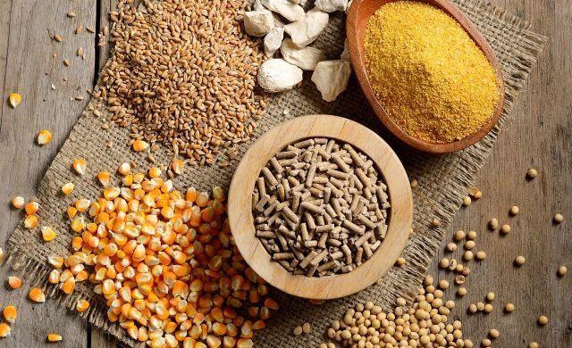 6 tháng đầu năm 2021, doanh thu xuất khẩu thức ăn chăn nuôi đã đạt hơn nửa tỷ USD.