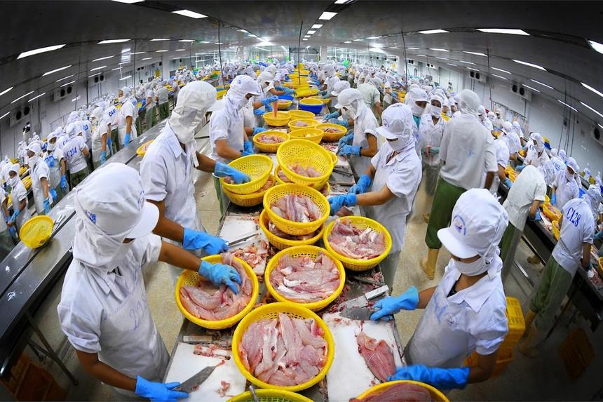 Doanh nghiệp thủy sản chật vật duy trì sản xuất