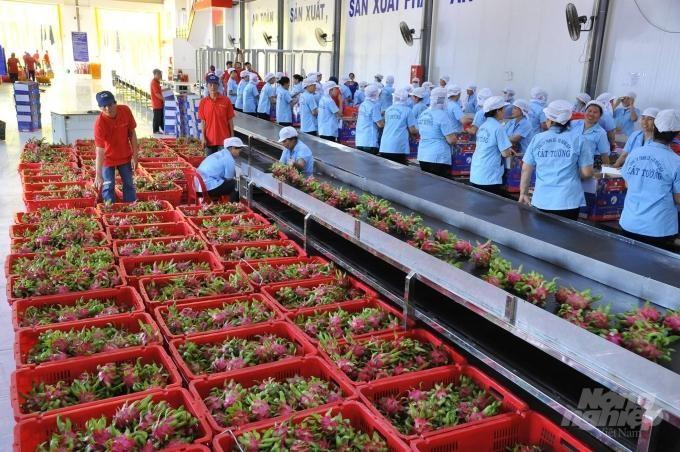 Xuất khẩu hàng rau quả của Việt Nam trong tháng 8/2021 đạt 230 triệu USD, mức thấp nhất kể từ tháng 7/2020.
