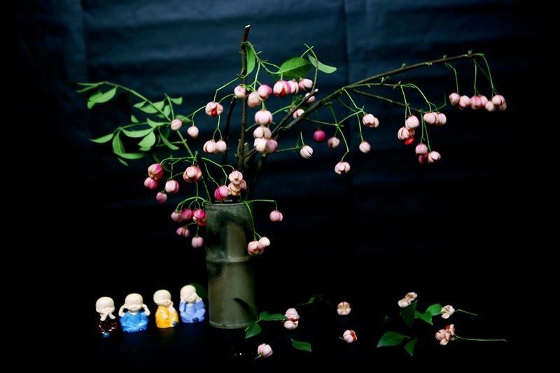 Cành quả lồng đèn yểu điệu, quyến rũ khiến người yêu hoa mê đắm