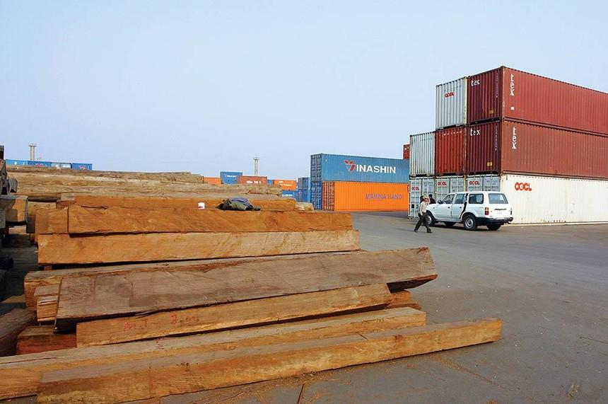 Giá gỗ nhập khẩu tiếp tục tăng, các doanh nghiệp cần liên kết mua chung để giảm giá. Ảnh: Đức Thanh
