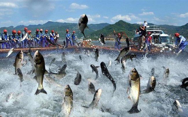 Nam Việt (ANV): Cổ phiếu tăng trần, lãnh đạo muốn bán bớt 5 triệu cổ phiếu