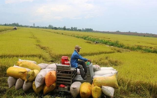 Nông nghiệp Cần Thơ (TSC) chào bán hơn 49,2 triệu cổ phiếu cho cổ đông hiện hữu, giá 10.000 đồng/CP